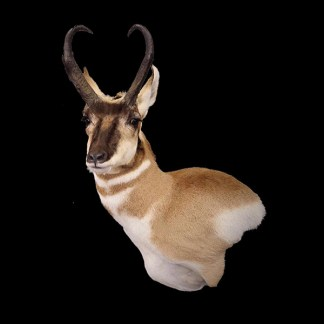 North American Taxidermy Products