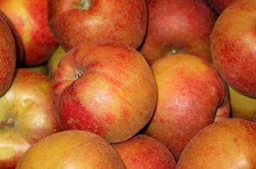 Apple and Craisin Coleslaw