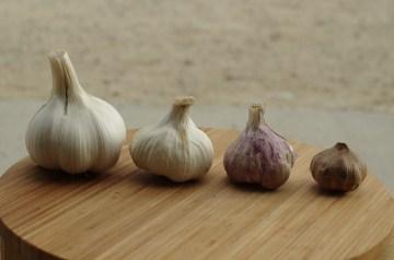 Elephant Garlic Herbed Croutons