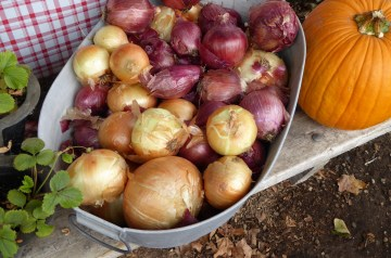 Dilled Cucumber and Onions