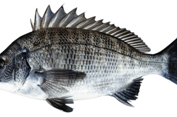 Roasted Sea Bream With Herbs