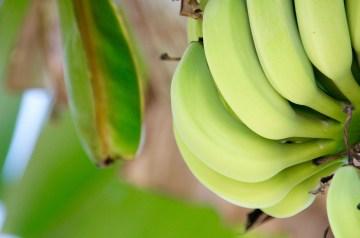 Frozen Banana Creme