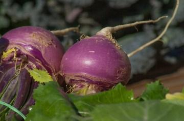 Turnips Gratines