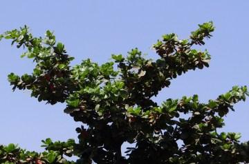 Thandai (Indian Almond Drink)