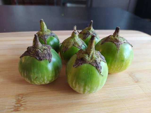 Aubergines makheua thai