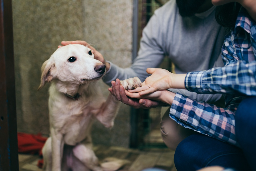 Help Pay Vet Bills for a Rescue Animal