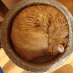 カラーBOXで作る猫の隠れ家その2!床につめとぎを敷こう!