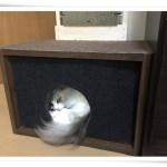 カラーBOXと段ボールで作る!愛情たっぷり猫の隠れ家その1