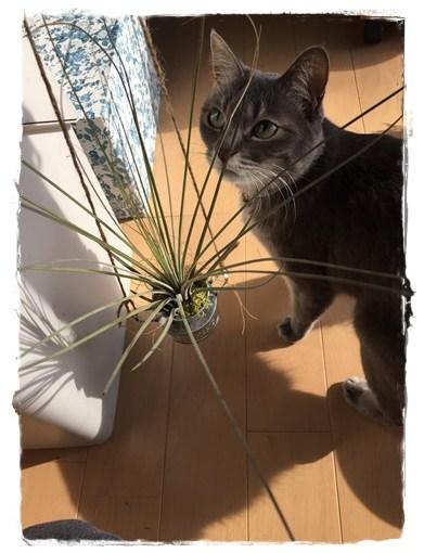 エアプランツのおしゃれな飾り方!不思議植物のお世話方法とは?