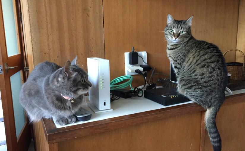 カラーボックスの横置き収納!100均DIYで猫のいたずらを撃退!