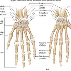 Wrist And Hand Unlabeled Diagram Dollar Bill Origami Flower Carpals Chandler Physical Therapy