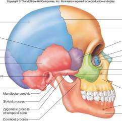 Lateral View Skull Sutures Diagram Yamaha Golf Cart Wiring Gas Head And Neck | Chandler Physical Therapy