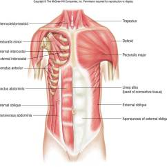 Back Muscles Diagram Unlabeled Bmw E30 M10 Wiring Muscle Iii | Chandler Physical Therapy