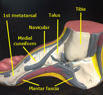 Ankle & Foot Chandler Physical Therapy