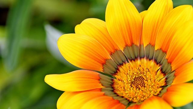 Sunflower image by Wow Pho via Pixabay