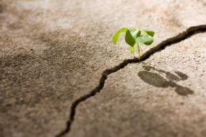 A resilient life