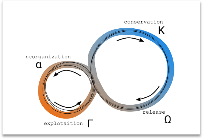 The Adaptive Cycle model, with two interacting cyles, a small fast one with reorganization and exploitation as its phases, and a large slow cycle with conservation and release as its phases
