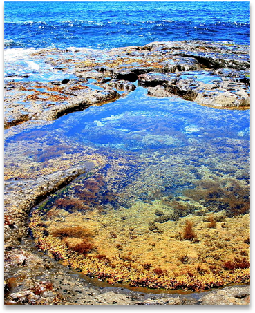 An ocean tidal pool as an example of a possibility space.