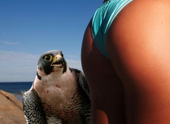 erotic_falconry.jpg