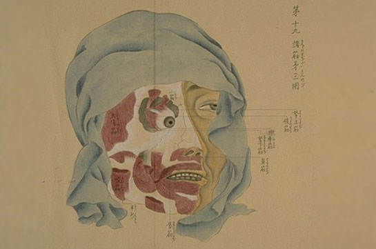 japanese_anatomy_scrolls.jpg