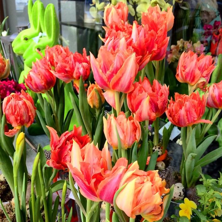 Tulips of Berlin
