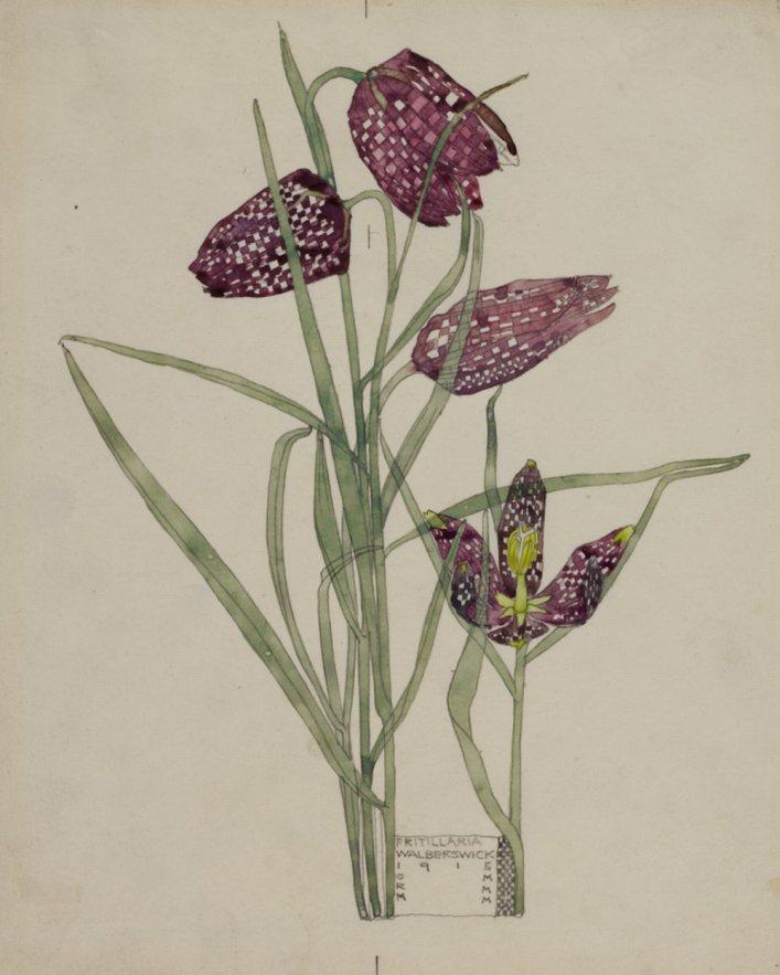 Fritillaria Walberswick 1915