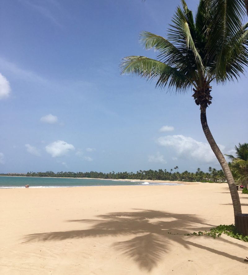 The sand and palm tree at St. Regis Bahaia Beach in Old San Juan: Puerto Rico | Letters from abroad, Puerto Rico and Old San Juan | Changing Pages #Travel #Photography | BL | Black Lion Journal | Black Lion