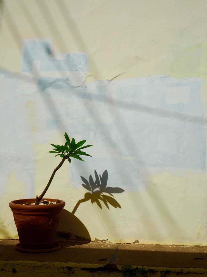 Plant outside a home in Old San Juan, Puerto Rico | Letters from abroad: Puerto Rico and Old San Juan | Changing Pages #Travel #Photography | BL | Black Lion Journal | Black Lion