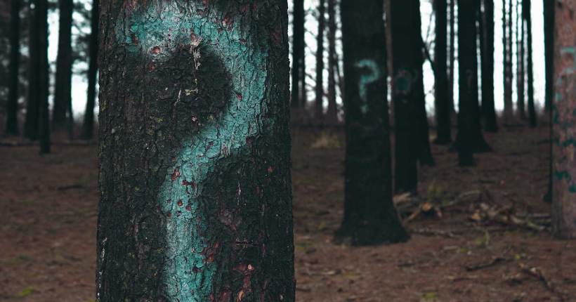 Question marks spray painted on trees in a forrest