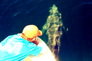 Dolphin Watching Tours Costa Rica