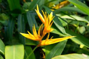 Botanical Gardens Osa Peninsula Costa Rica