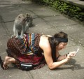 monkey-and-tourist