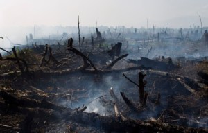 tripa burns 20120613aceh07