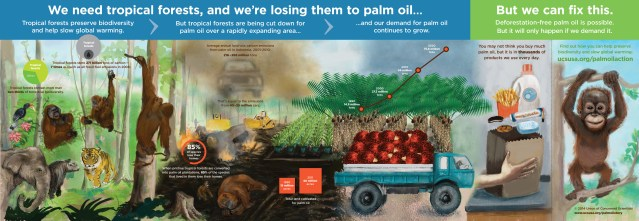 Palm-Oil infographic-2-6-14-2216px
