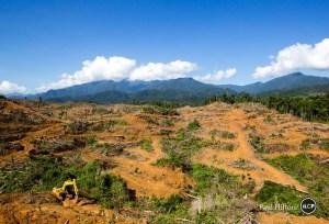 leuser palm oil