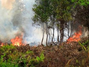 Fires are again burning in Indonesia's forests. Photo by Rini Sulaiman Norwegian Embassy for Center for International Forestry Research CIFOR