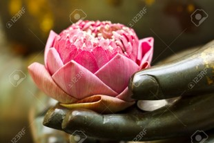 lotus in hand