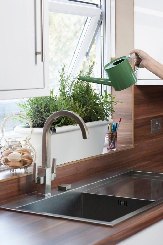 woman watering herbs in a window box