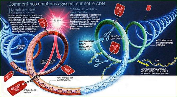 adn-emotions