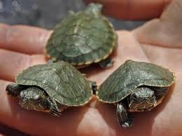 We Are Erik's Pet Turtles