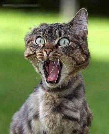 Image result for images of Scaredy Cats