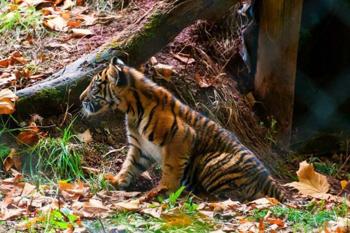 F0916-0067 PR4Photos - Paignton Zoo