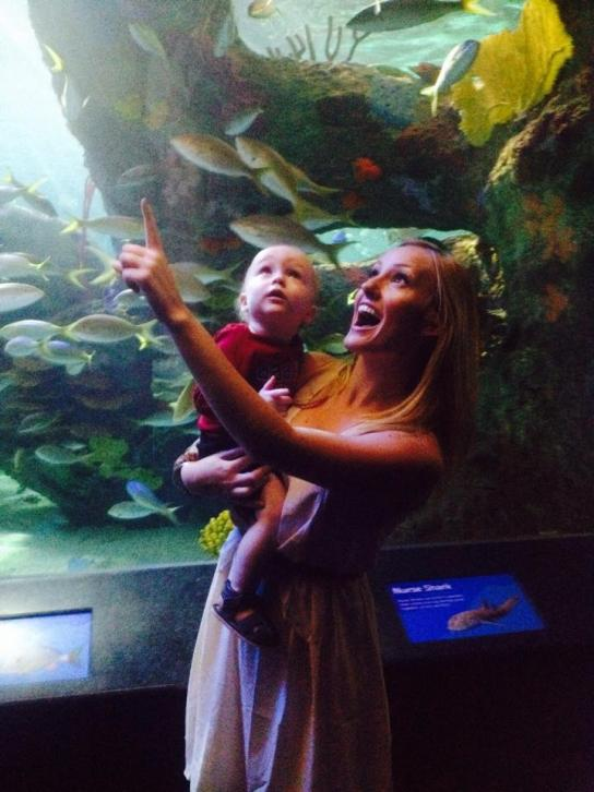 travel blog, aquarium, things to do in Toronto, jelly fish, ripleys