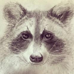 A pencil sketch of racoon.