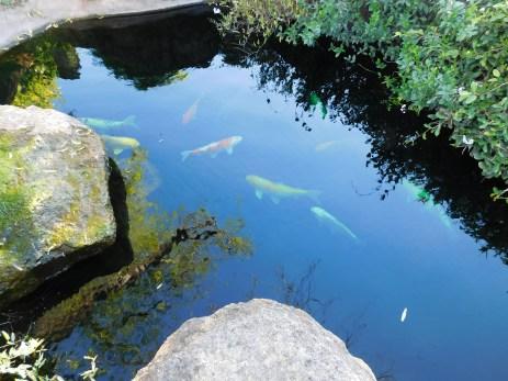 Chateau Peju 酒庄花园池塘