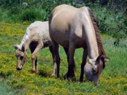 母與子 - 野馬
