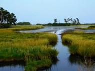 快乐的沼泽
