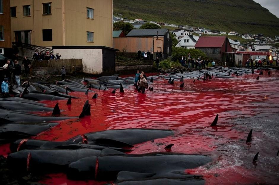 有種傳統叫做殺鯨 | 瞧.中外