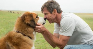 First Trailer for W. Bruce Cameron's Bestselling Book A Dog's Journey Film