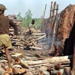 Secretaria Ação Social e Cidadania, alerta sobre Riscos e Prejuízos do Trabalho infantil